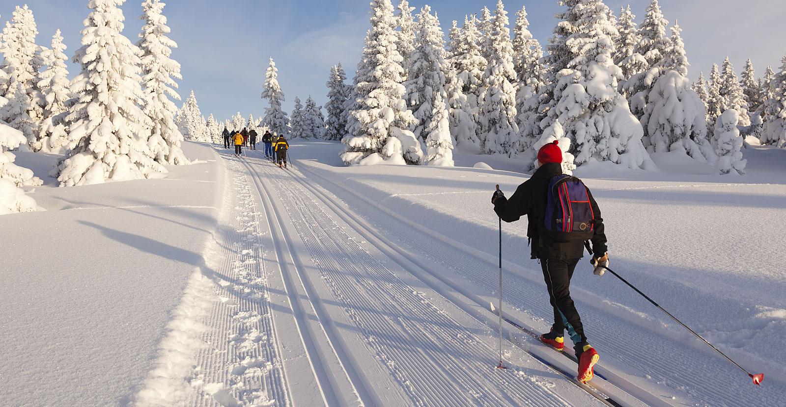 Winter im Bayerischen Wald  - Langlaufloipen